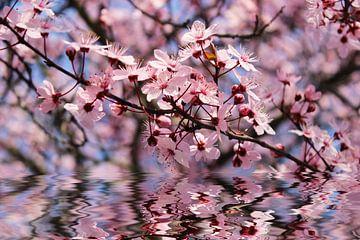 Frühlingserwachen von Dagmar Marina