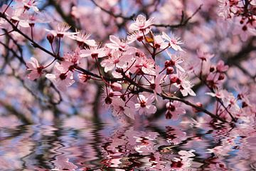 Frühlingserwachen van Dagmar Marina