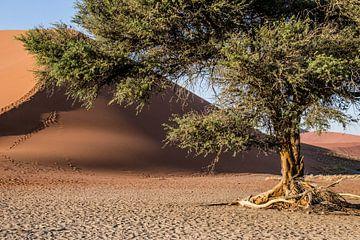 Dune 45 van