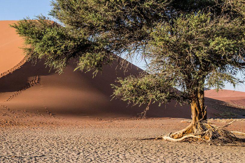 Dune 45 van Sander RB