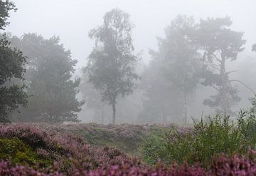 Nebel auf dem Moor von Tania Perneel