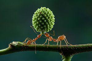 Teamwork van