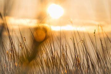 Ein goldener Sonnenuntergang von Wendy Tellier - Vastenhouw
