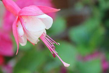 Farben der Natur von Cheyenne Hein