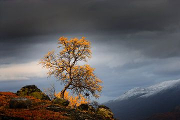 Fjell in Noorwegen in de herfst van