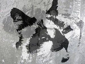 Kattenkunst - Diesel 2 van
