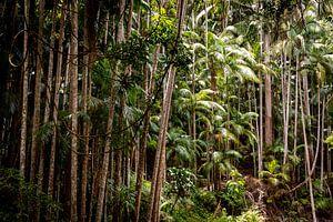 Regenwoud van