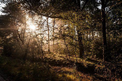 Opkomende zon in het bos