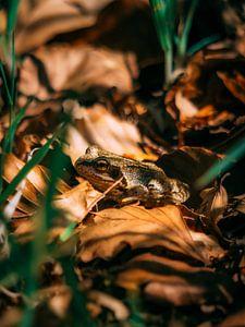 Frosch von Rianne Jacobs