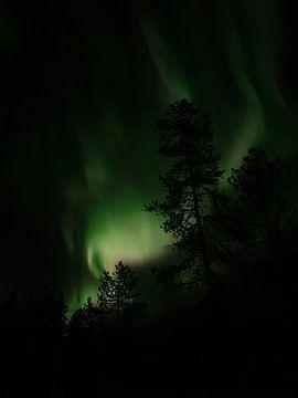 Northenlights and the tree von Kylie Van dommelen