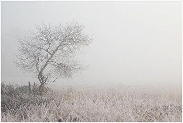 winterochtend van Hetwie van der Putten