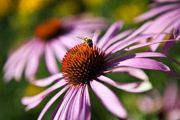 Bloeiende bloem met bij van Wouter Van de Kamp