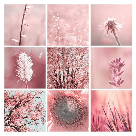 3X3 Pink