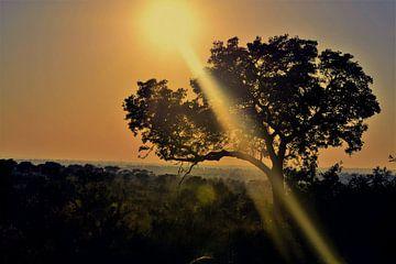 Aufgehende afrikanische Sonne von Kim de Vos  - Carpe Diem