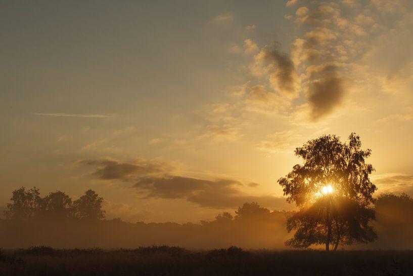 Morning Moods sur Hans Koster