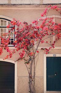 Bloemen in Lissabon van
