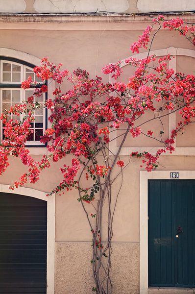 Bloemen in Lissabon van Kramers Photo