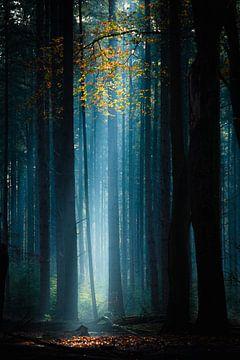 Niederländischer Wald von Frank Verburg