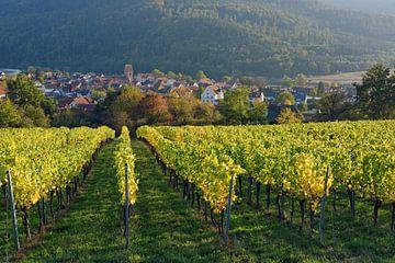 Dorfprozelten am Rande des  Spessarts von Gisela Scheffbuch
