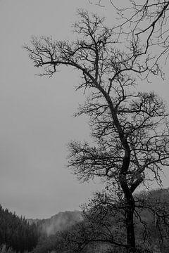 Winterbaum ❘ Ardennen ❘ Dramatisch ❘ Schwarz-Weiß-Fotografie ❘ Wallonie von Floor Bogaerts