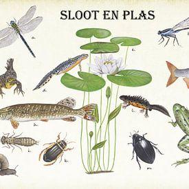 Planten, dieren en vissen van sloten en plassen van Jasper de Ruiter