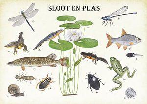 Pflanzen, Tiere und Fische von Gräben und Teichen