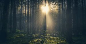 Zonneschijn door de bomen van