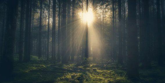 Zonneschijn door de bomen van Joost Lagerweij