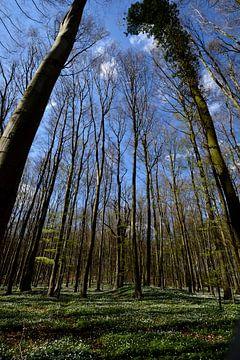 Anémone de bois près de Klein Stresow sur GH Foto & Artdesign