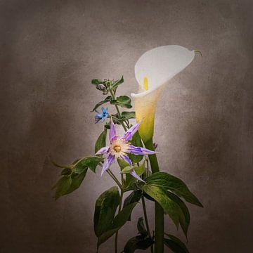 Grazile Blumen - Calla, Clematis, Stern von Jericho | Vintage-Stil von Melanie Viola