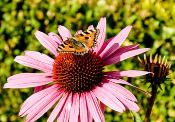 Vlinder  von Stef De Vos