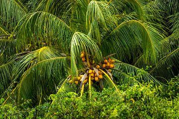 Palmtop van Maarten Borsje