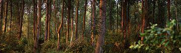 Het Bos van Emre Kanik