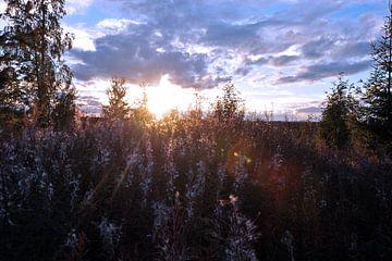 Zweden landschap 1 van Marieke EWA