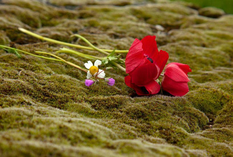 Stilleven van bloemen op groen mos, op een graf in de Necropolis in Pamukkale, Turkije van Eyesmile Photography
