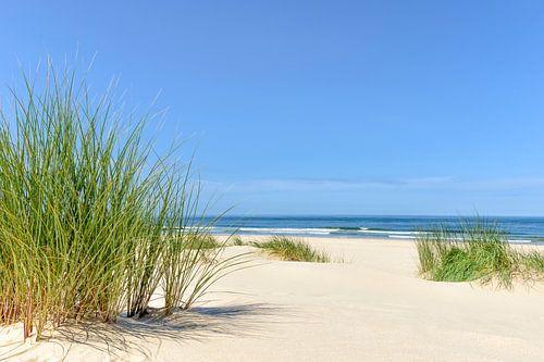 Duinen aan het strand met helmgras tijdens een mooie zomerdag aan het Noordzeestrand