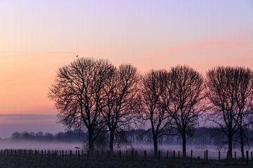 Mist in de Polder van Jeffrey Van Zandbeek