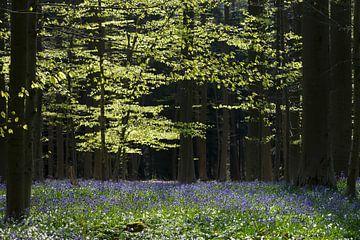 Haller forest sur Menno Schaefer