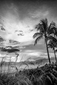 BONITA BEACH Coucher de soleil de rêve | Monochrome sur Melanie Viola