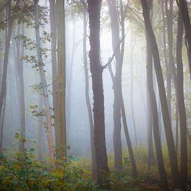 Nevel in het spookbos van Martin Wasilewski