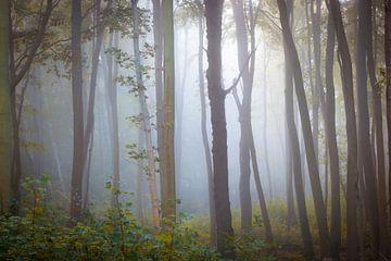 Nebel im Gespensterwald von Martin Wasilewski