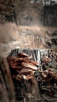 Pilze von AciPhotography
