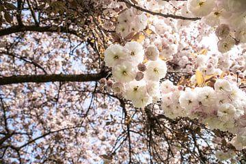 Frühlingstage im Park | Blüte | Weiße Rose von Wendy Boon