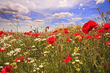 bloemenzee in de polder van Els Fonteine