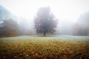 Boom in de mist van Martin Wasilewski