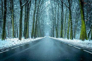Straße in einem verschneiten Winter Buchenwald während eines kalten Wintertages von Sjoerd van der Wal