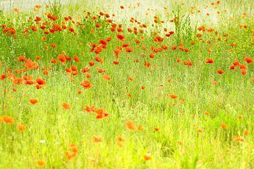 Mohnblumen im Stil von Monet von Birgitte Bergman