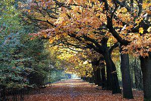 Prachtige herfst bos in warme herfstkleuren