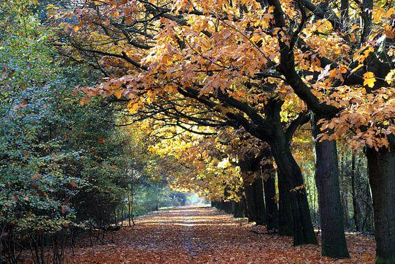 Prachtige herfst bos in warme herfstkleuren van Jolanta Mayerberg