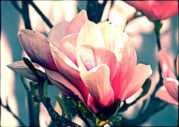 Magnolienblüte van Rosi Lorz